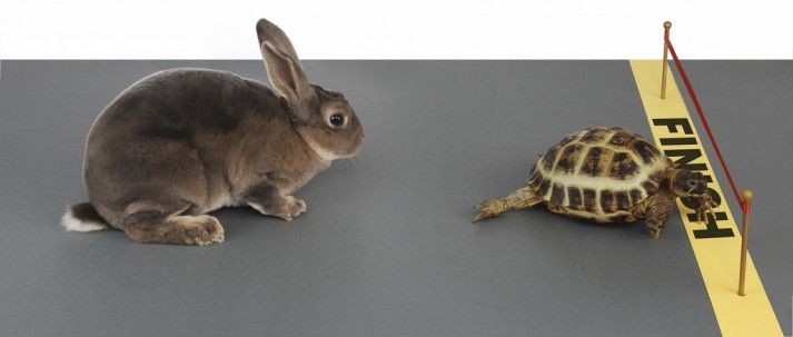 tortoise and bunny